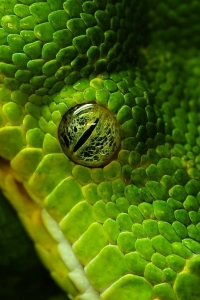 Vorschau Grün snake Handy Logo