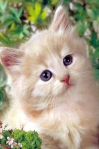 Vorschau Süße Katze Handy Logo